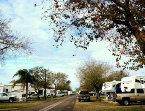 Fig Tree RV Resort - Picture 2