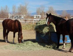 Kiva RV Park and Horse Motel - Picture 3