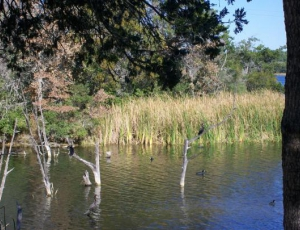 Lake Bastrop South Shore Park - Picture 1