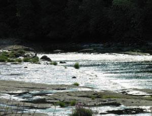 Sawyers Rapids RV Resort - Picture 3