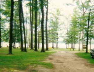 Timber Surf Camping Resort - Picture 3